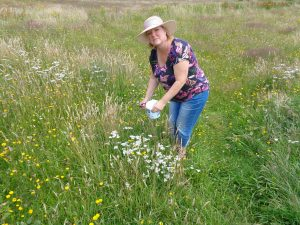 Catharina plukt Alchillea Millefolium